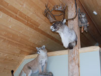 Cabin Wildlife