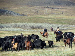 Fall Cattle Drive